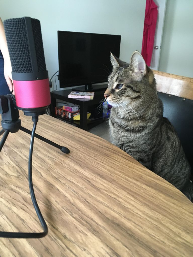 Alpha, a gray tabby cat, sits in front of a microphone